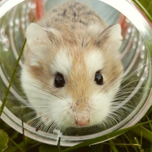 Buy 3 Kaytee Products, Get a Free Hamster!