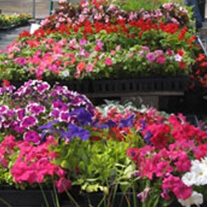 Market Pack Annuals & Vegetables Special