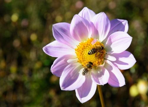 Bee Pollinator Seminar