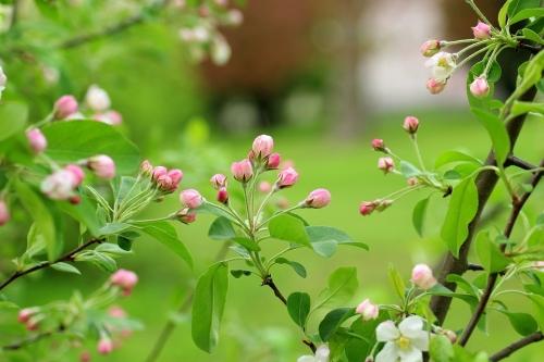 Semi‑Dwarf Flowering Fruit Trees $69.99