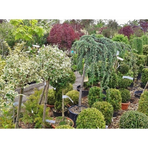 25% Off All Trees & Shrubs
