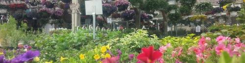 Our Garden Center is in Full Swing!