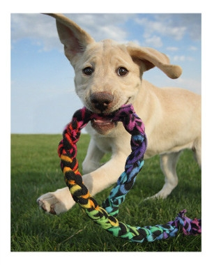 $2 OFF any Pet Toy purchase of $10 or more