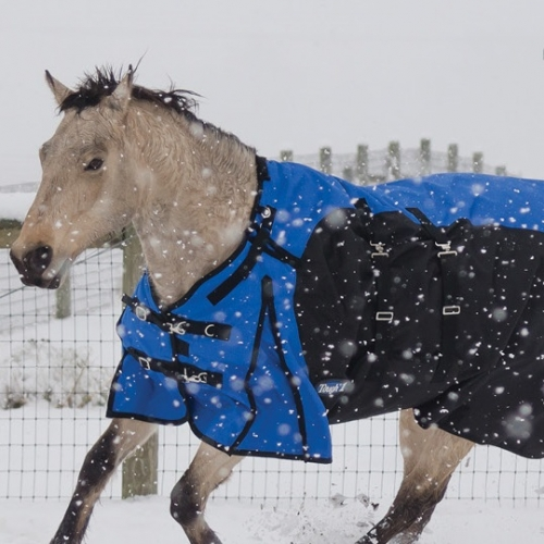 10% off Horse Blankets
