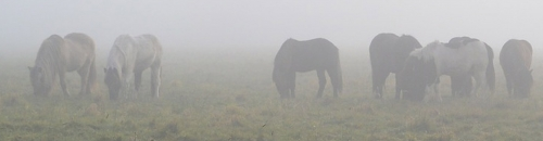 A Healthy Horse in the Fall is a Healthy Horse in the Winter