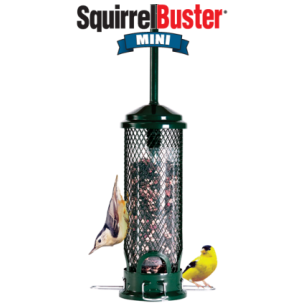 Squirrel Buster Mini Bird Feeder