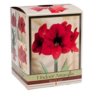 Netherland Bulb® Company Amaryllis Bulb Gift Box