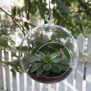 """Syndicate 5 ¼"""" Round Hanging Terrarium"""