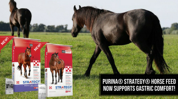 equine strategy