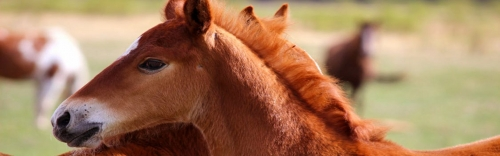 Keep Your Horses Healthy