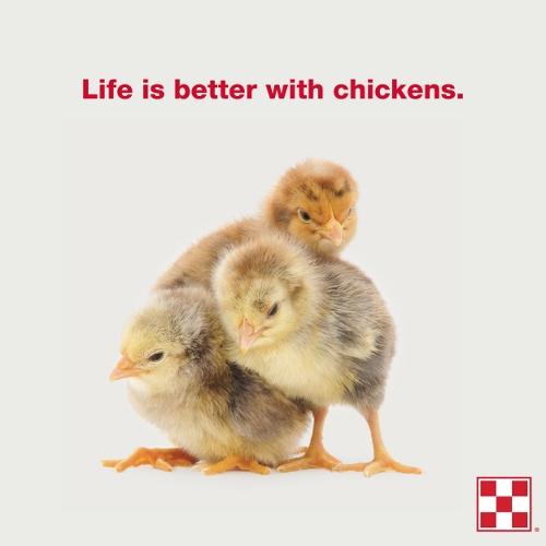 Purina Chick Days