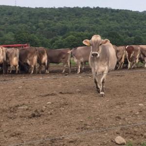 Fall Cattle Meeting - Elsie
