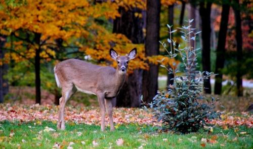 Home Jacksboro Tx Fort Worth Tx Hunting Supplies Deer