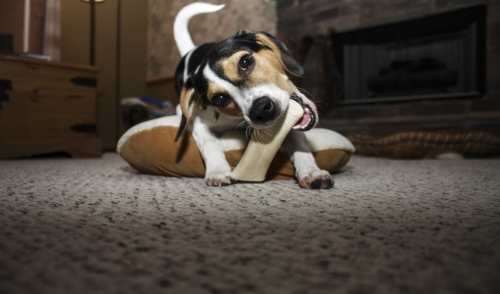 How To Cut Down on Treats without Depriving your Dog