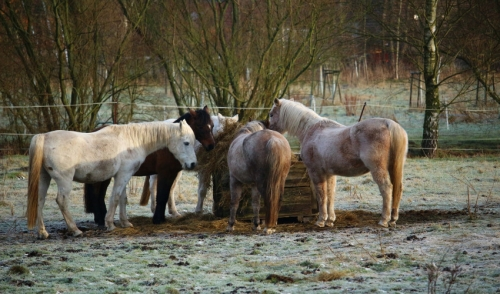 The Importance of Feed over Forage in Horse Diets