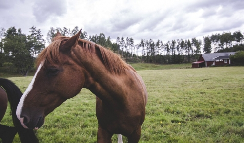 How to Adjust Horses to the Changing Seasons