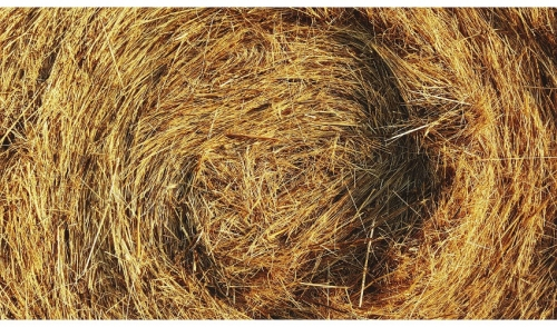 How to Preserve Nutrients in Hay
