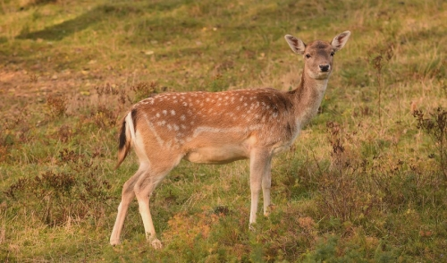 Keeping Deer Healthy in the Hot Summer Months
