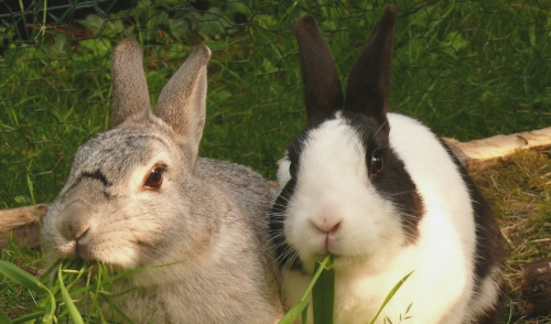 Rabbit Care Tips for the Summer