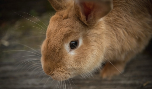 Rabbit Tips: The 4-Square Philosophy for Success