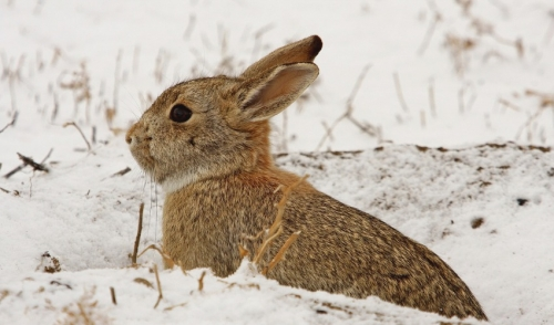 Tips for Preparing your Rabbit for the Cold Winter Weather