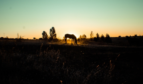 Help Us Give Rescue Horses a Second Chance