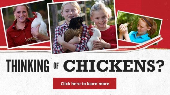 chicks coming