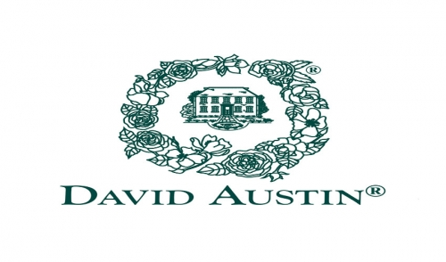 David Austin Roses are Here!