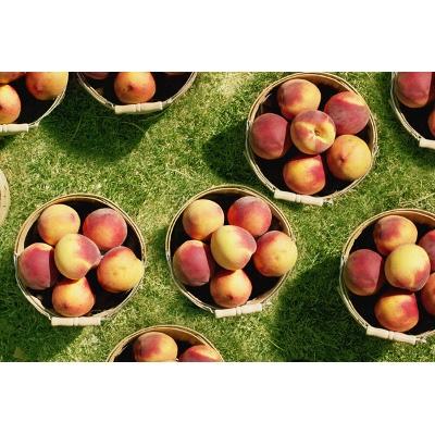 Locally Grown Peaches