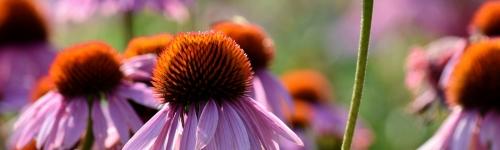 Fresh Summer Perennials