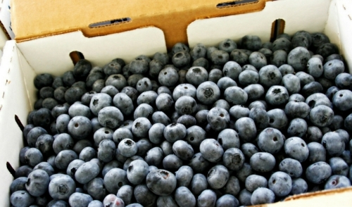 Freezing Blueberries