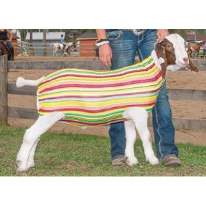 $4.50 Off Spandex Goat Tube