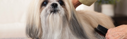 Pamper your pooch with our grooming services!