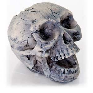 Human Skull – Small