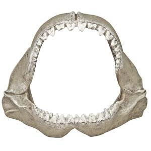 Exotic Environments® Great White Shark Jaws-Small