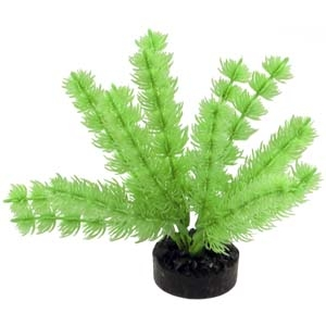 ColorBurst Florals® Foxtail Plant – Neon Green