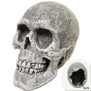 Exotic Environments® Human Skull Mini