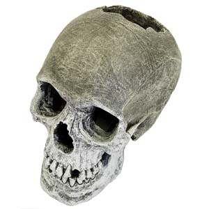 Exotic Environments® Life-like Human Skull
