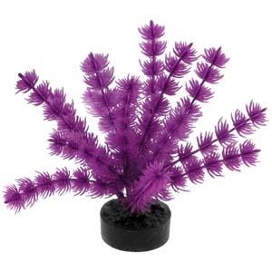 ColorBurst Florals® Foxtail Plant – Neon Purple