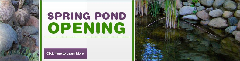 pond opening
