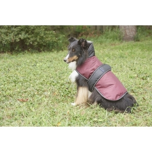 10% Off All Dog Coats
