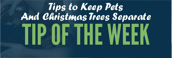 Tip of the Week Newsletter