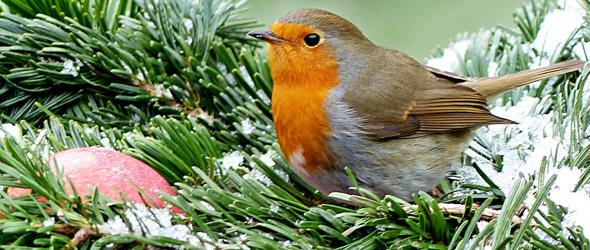 Wild Bird Newsletter