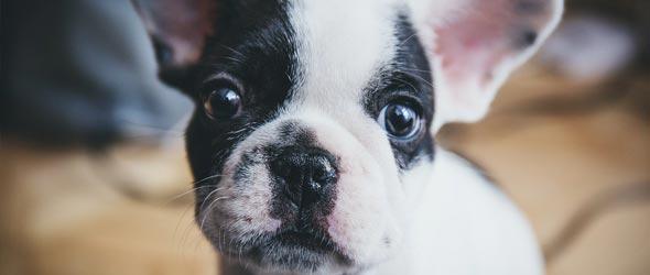 Pet Newsletter