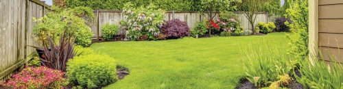 Thicken Lawn & Crown Out Weeds