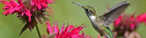 Hummingbird Season