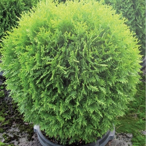 25% Off Trees & Shrubs