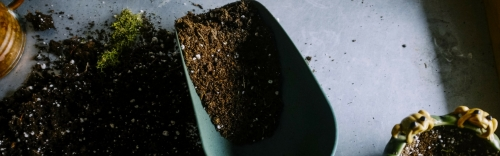 Spring Veggie Seeds