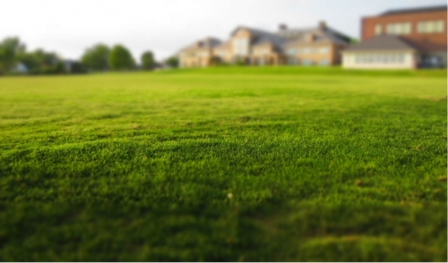Why Aerate and Dethatch Your Lawn?