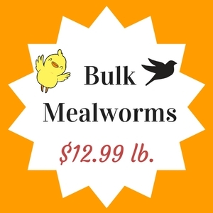 Mealworms $12.99/pound
